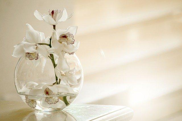引っ越し祝いで胡蝶蘭を贈るのは迷惑?花言葉や風水的にどうなのか解説!