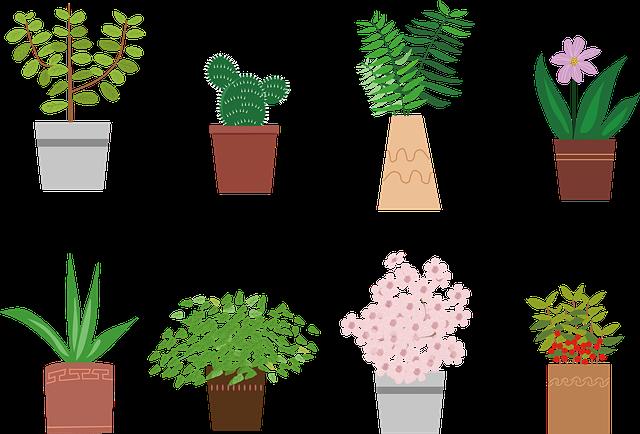 引っ越し祝いで観葉植物は迷惑?縁起の良い観葉植物や贈るときの注意点まとめ