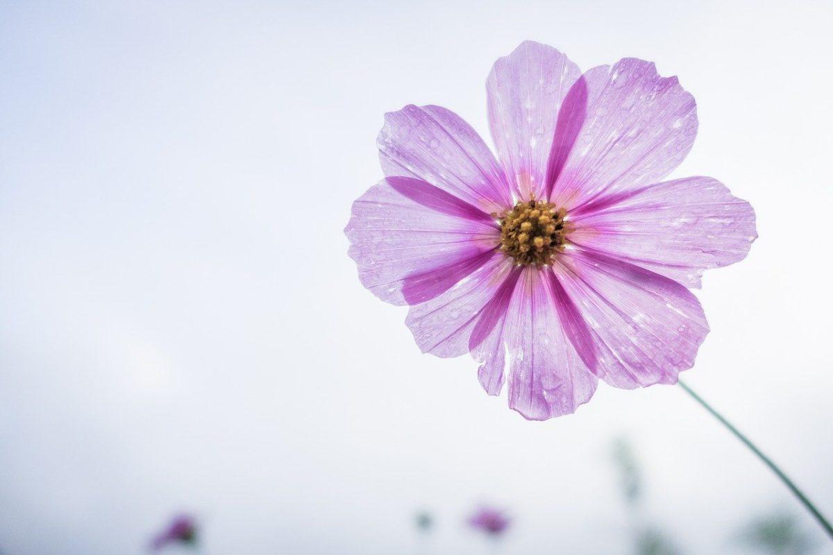 引っ越し祝いで贈る花とは?幸運の花言葉の花や種類を解説!